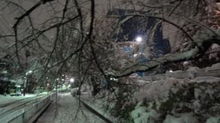この2回目の雪は1回目の雪よりも湿った重たい雪でした。