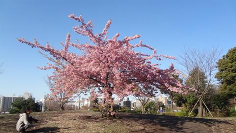 旧山手通りまでもどって散歩は西郷山公園に。