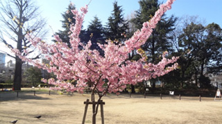お散歩は流れで菅刈公園へ。