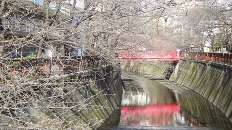 そのままの流れで目黒川までくると向こうに赤い橋。