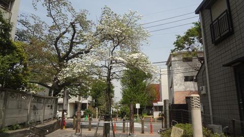 今が咲き誇っている時期なのかなと思った樹です。