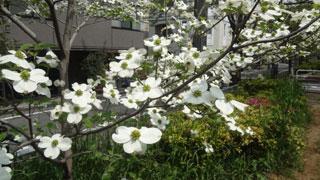 この樹なら花に接写ができます。